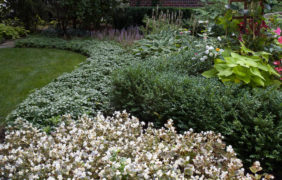 frontyard-landscaping (1)